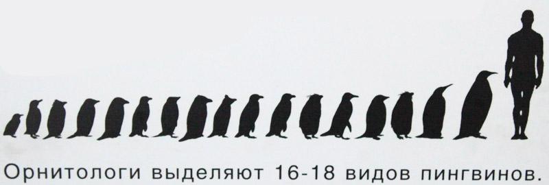 Вы пингвин?